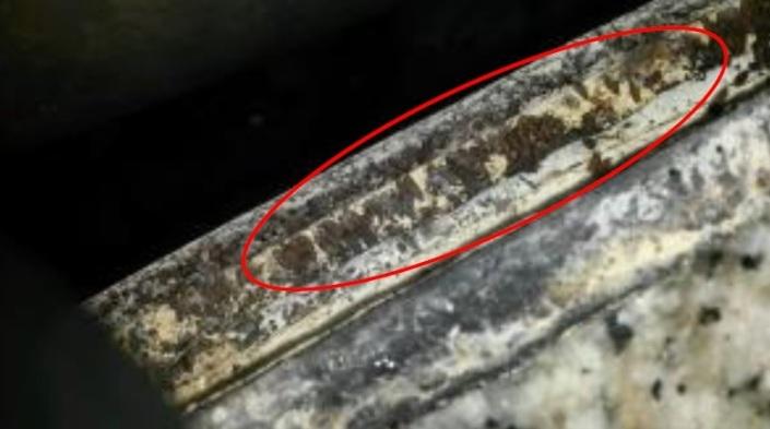 Droshopila spp.