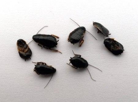 """Las """"otras"""" cucarachas"""