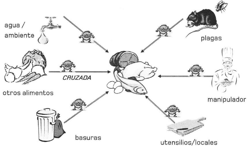 La Contaminación Cruzada -Conceptos básicos para el Control de ...